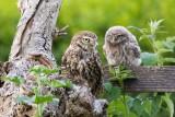 Birds,  Netherlands