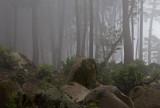 Sintra Fog