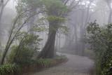 Foggy Sintra