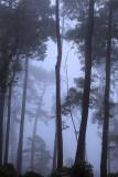 Loving Sintra Fog