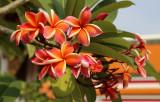 Wat Pho flowers