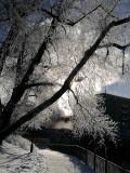 Winter Sparkle