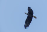Matthew's Eagles