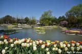 Tonami Tulip Park DSC_5809