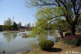 Tonami Tulip Park DSC_5893