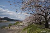Hinokinaigawa River's Bank DSC_6348