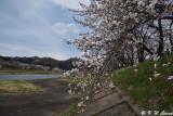 Hinokinaigawa River's Bank DSC_6315
