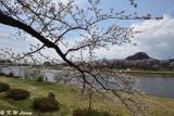 Hinokinaigawa River's Bank DSC_6335