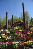 Tonami Tulip Park DSC_5857