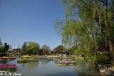 Tonami Tulip Park DSC_5901