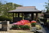 Tonami Tulip Park DSC_5881