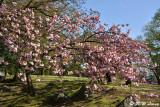 Sakura DSC_5897