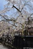 Sakura DSC_6289