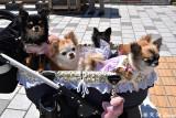Dogs DSC_5430