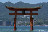 Floating Torii Gate of Itsukushima Shrine DSC_7823