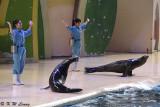 Sea Lion Show DSC_0304