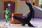 Sea Lion show DSC_0331