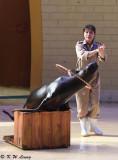 Sea Lion show DSC_0306