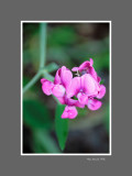 Floral 71
