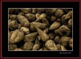 Sugar beets