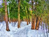 Jack Pine Trail In Winter DSCN03663-5 'Art'