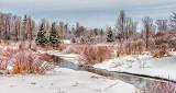 Springtime Hutton Creek DSCN03795-7