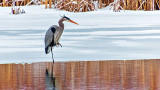 Heron On Ice DSCN04211