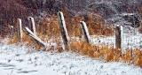Snowy Fence Posts DSCN04180