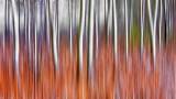 Snowy Cattails & Trees-Blurred DSCN04203-5