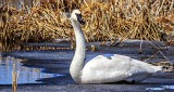Swan On Ice DSCN04696
