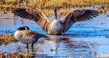 Stretching Goose DSCN04687