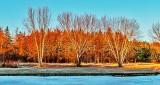Trees In Sunrise Glow DSCN04990-2