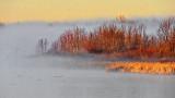 Foggy Irish Creek At Sunrise DSCN05400