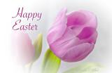 Happy Easter P1180738