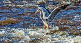 Heron Landing DSCN06343