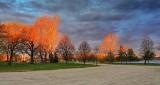 Trees In Sunrise Glow DSCN06664