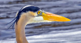 Heron Head DSCN06741
