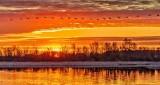 Skein of Geese At Sunrise DSCN07450