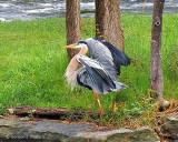 Heron Landing DSCN07837