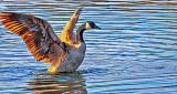 Stretching Goose DSCN08822