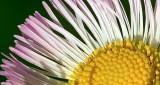 Wildflower DSCN10397 (crop)