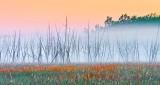 Dead Trees In Sunrise Ground Fog DSCN10665-7