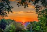 Sylvan Sunrise P1220377-83