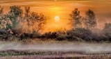 Sunrise Through Ground Fog P1220685-91
