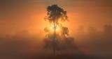 Tree In Sunrise Fog P1220790-6