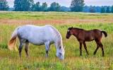 Horse & Foal P1230098