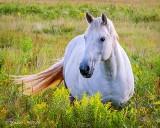White Horse P1230100