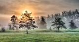 Trees In Sunrise Fog DSCN13690-2