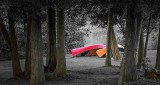 Trees & Canoes P1230371