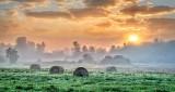 Bales & Fog At Sunrise P1240050-6